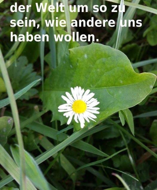 Hypnose-Therapie und Mental-Coaching Sandra Wollersheim Hypnose-Rheinsieg.de